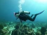 5 star PADI diving with Indigo Dive & Watersports